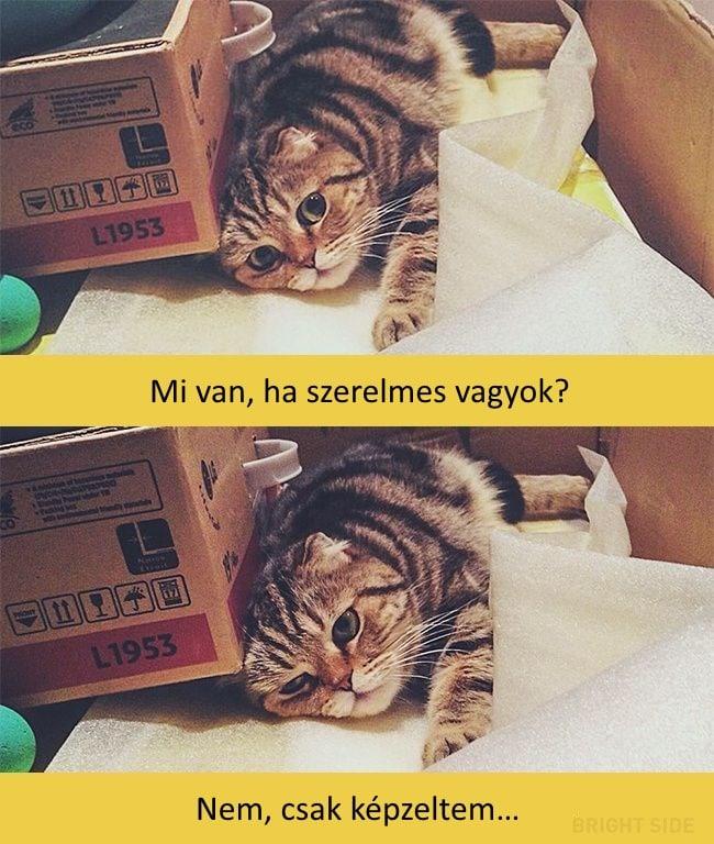 oscar díjas macskák5