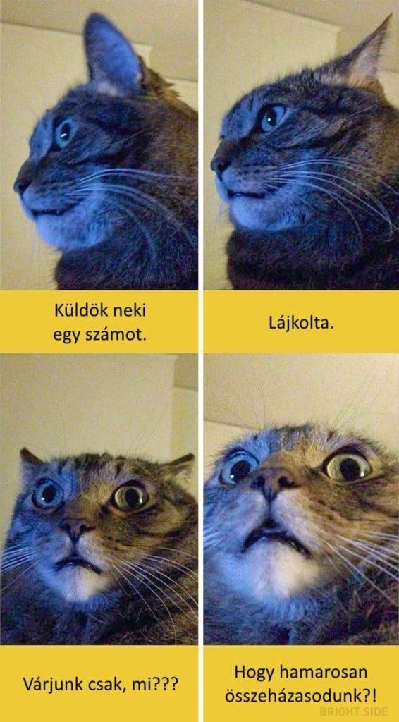 oscar díjas macskák6