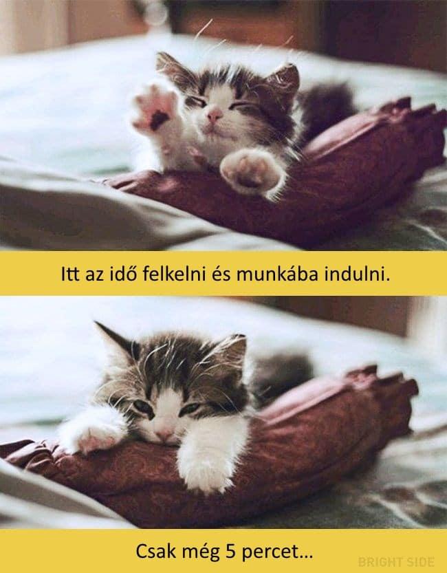 oscar díjas macskák7