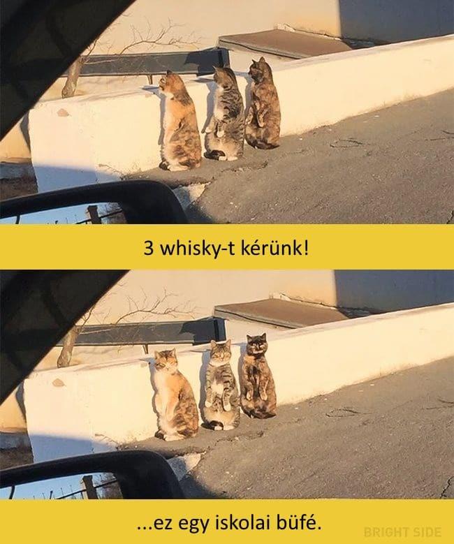 oscar díjas macskák9