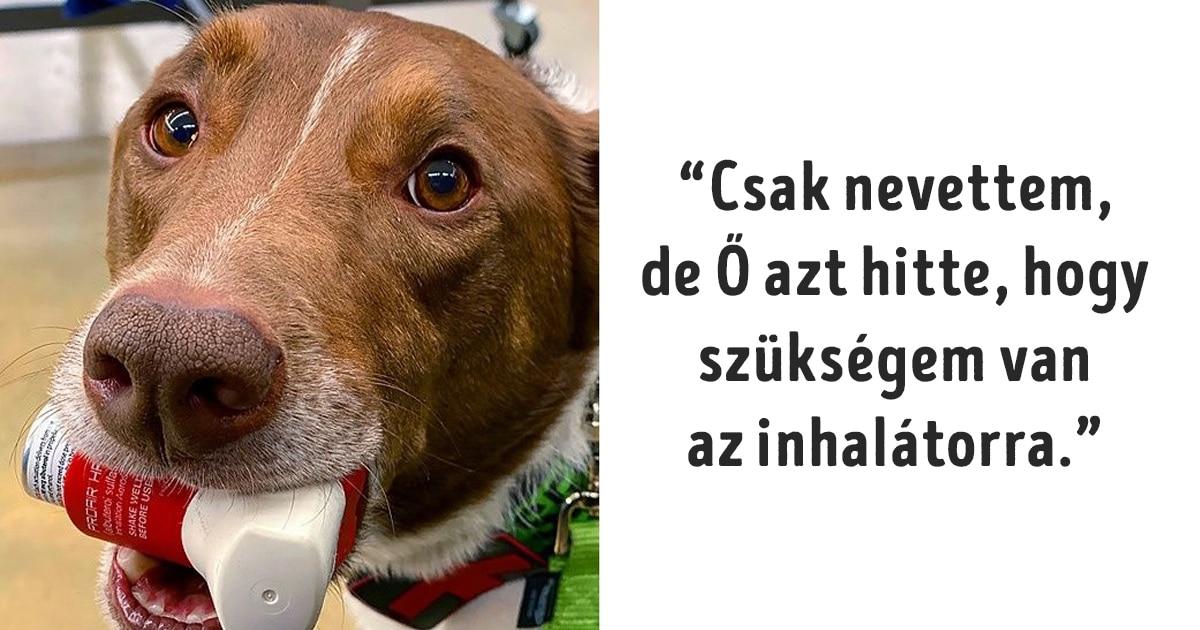 tántoríthatatlan kutyák