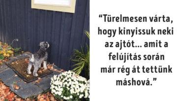 kutyák megnevettetik a gazdit