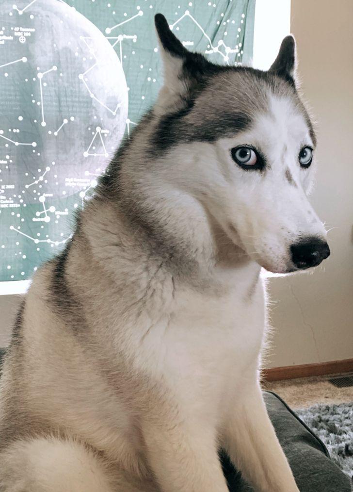 kutyák megnevettetik a gazdit6