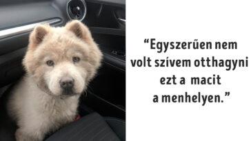 elviselhetetlenül cuki állatok