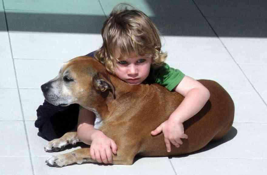 Az állatorvos elaltatná a rákos kutyát -de a kisfiú búcsúszavai megrendítik az egész világot!