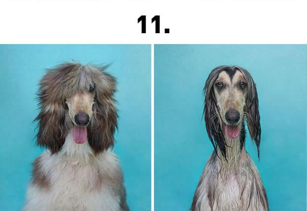 kutyafurdeselott11