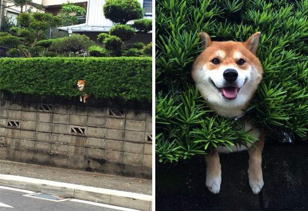 21 béna kutya, akik akaratlanul is mosolyt csalnak mindenki arcára12