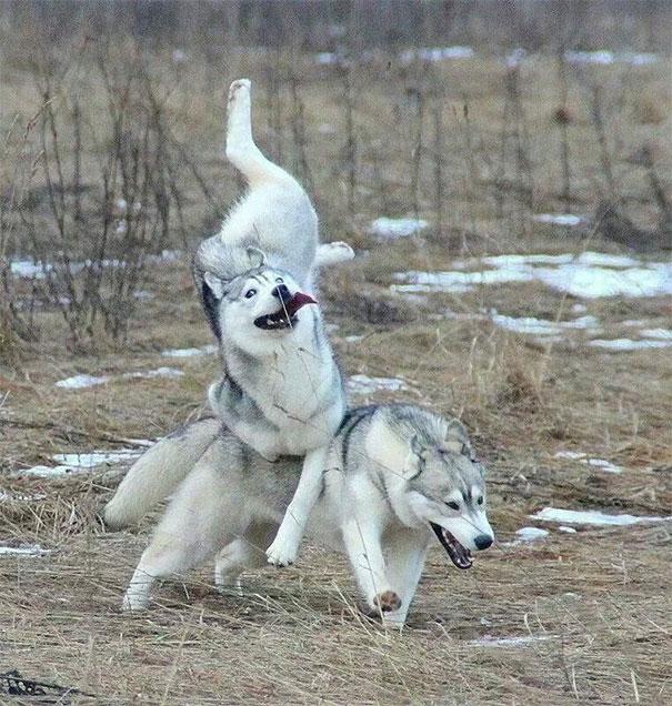 21 béna kutya, akik akaratlanul is mosolyt csalnak mindenki arcára5