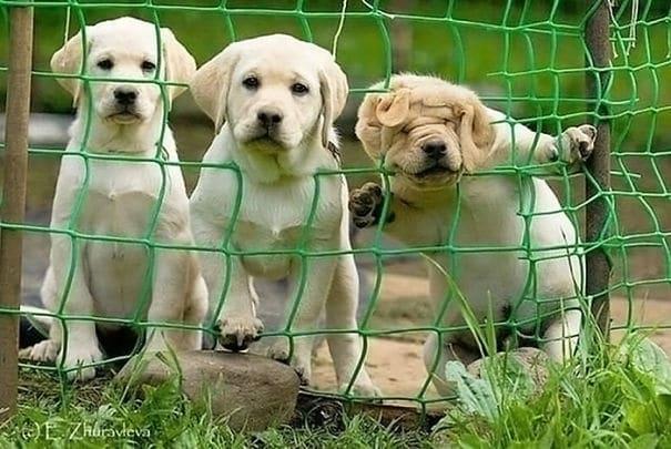 21 béna kutya, akik akaratlanul is mosolyt csalnak mindenki arcára8