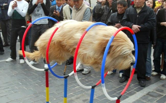 kutyaskepek12