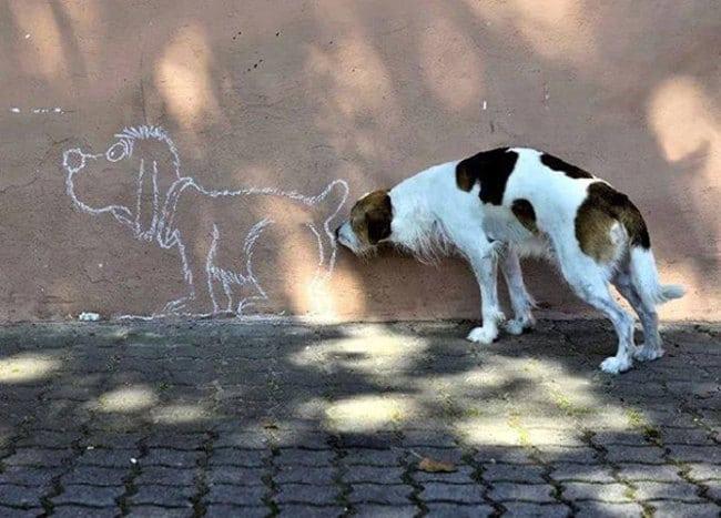 kutyaskepek24