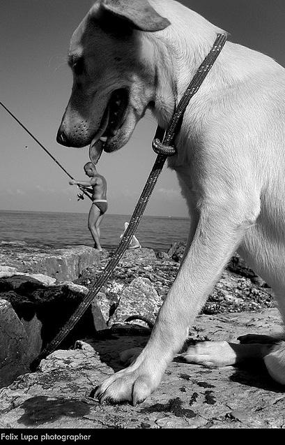 kutyaskepek3