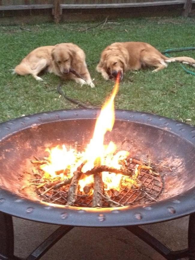 kutyaskepek4