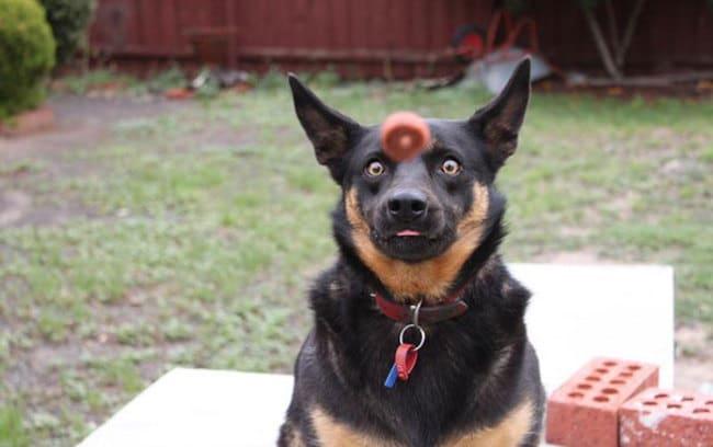 kutyaskepek9