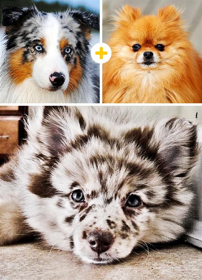 15 leírhatatlanul aranyos keverék kutya1