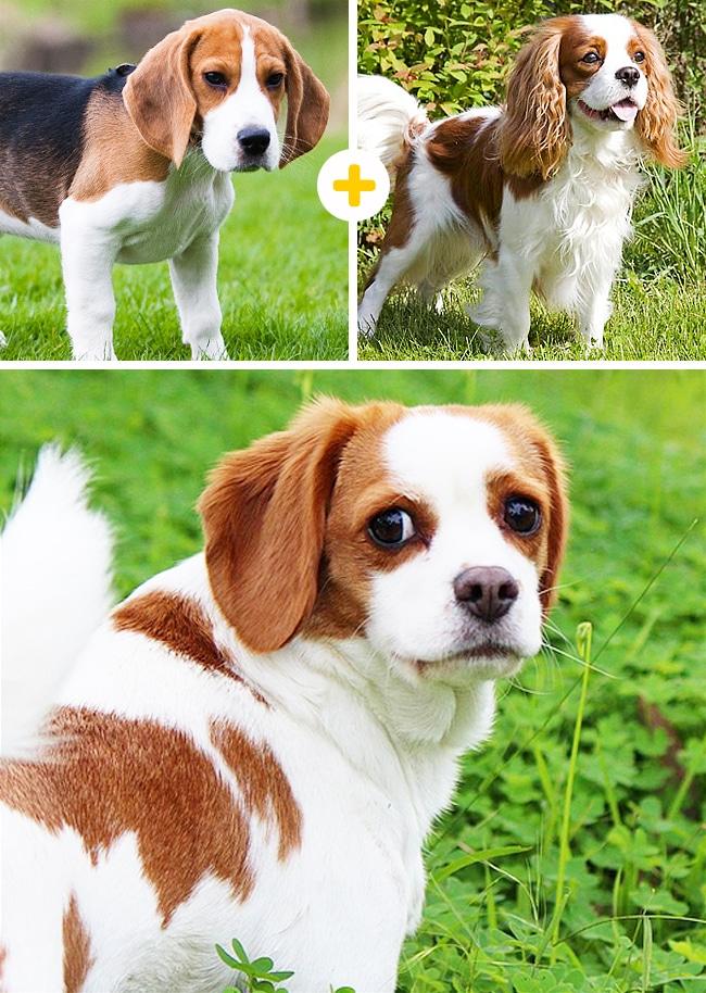 15 leírhatatlanul aranyos keverék kutya10