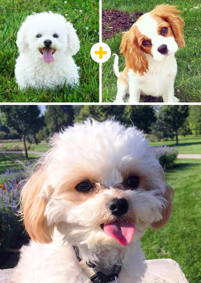 15 leírhatatlanul aranyos keverék kutya14