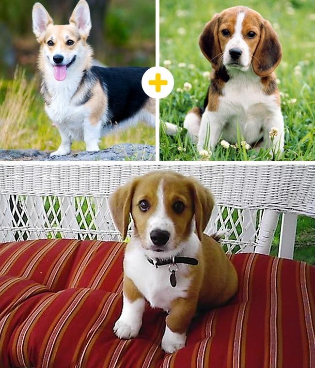 15 leírhatatlanul aranyos keverék kutya2