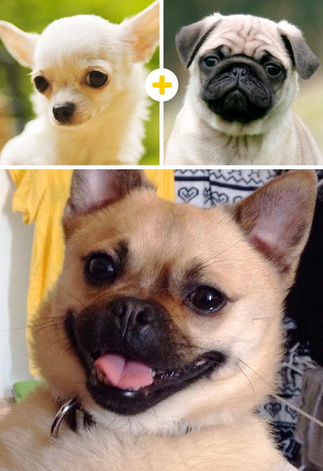 15 leírhatatlanul aranyos keverék kutya4