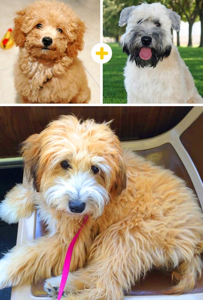 15 leírhatatlanul aranyos keverék kutya6