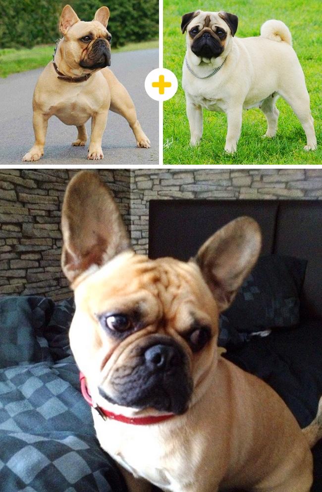 15 leírhatatlanul aranyos keverék kutya7