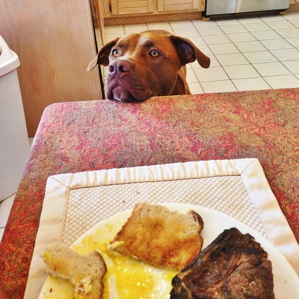 12 kutya, aki nem ismeri a pofátlanság fogalmát1