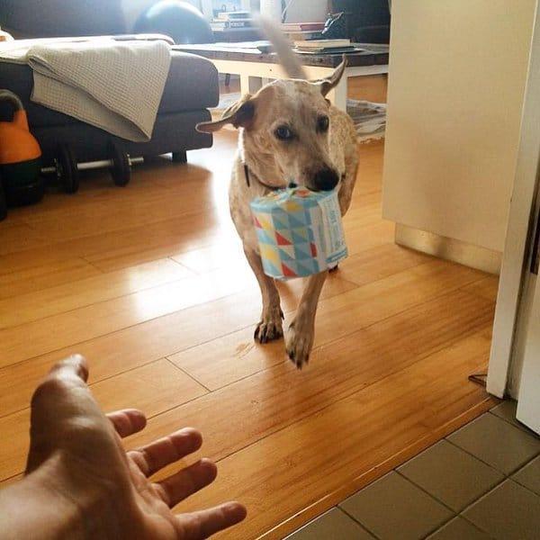 12 pofátlan kutya, aki még a wc-re sem engedi el egyedül a gazdáját12