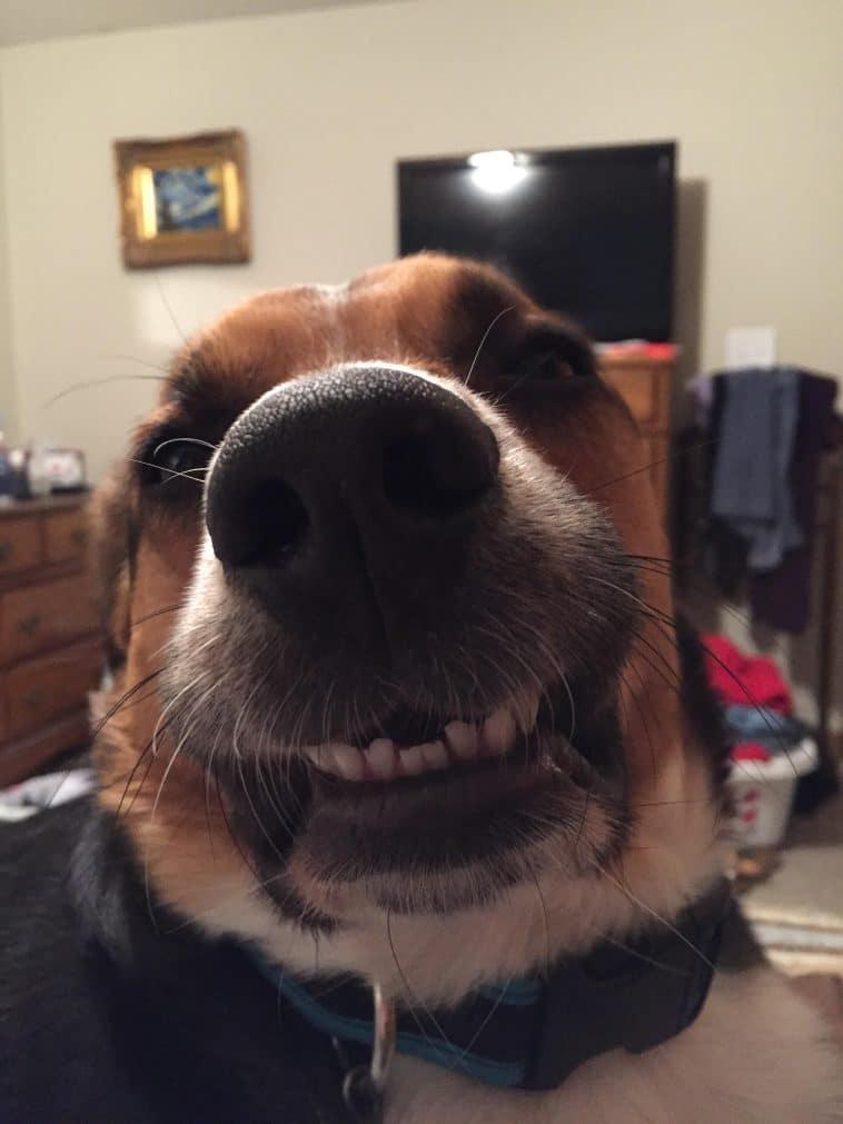 16 mosolygós kutyus10
