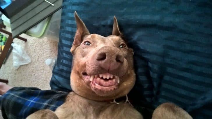 16 mosolygós kutyus12