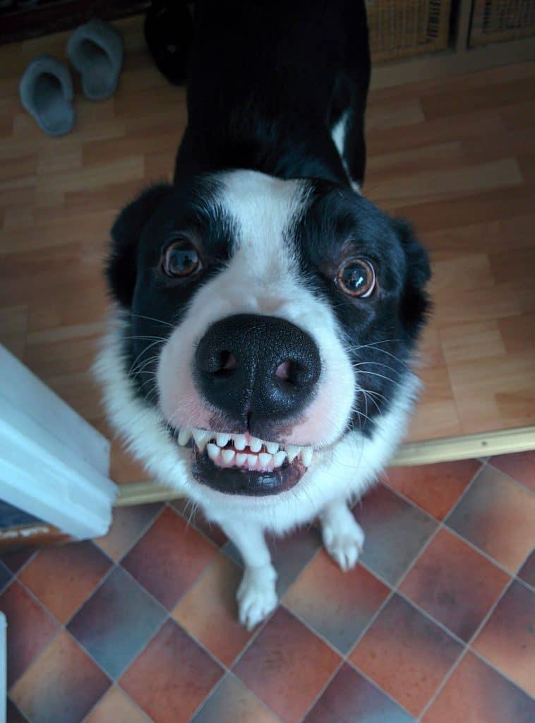 16 mosolygós kutyus13