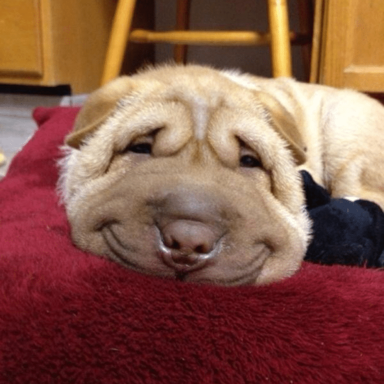 16 mosolygós kutyus5