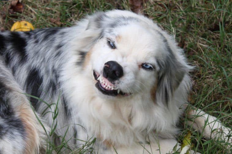 16 mosolygós kutyus8