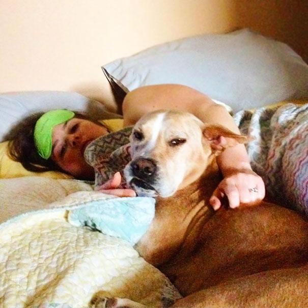 féltékeny kutyák