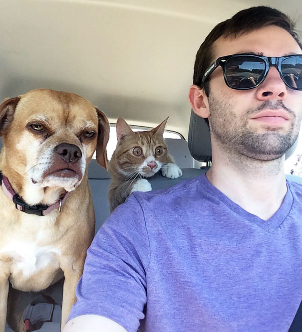 kutyák, akik orvoshoz mentek1
