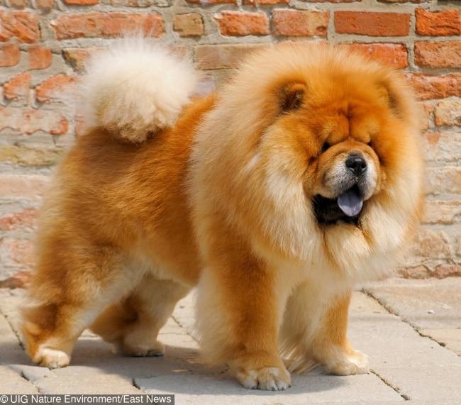 A világ 10 legdrágább kutyája