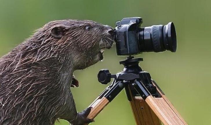 jól időzített állatos fotók