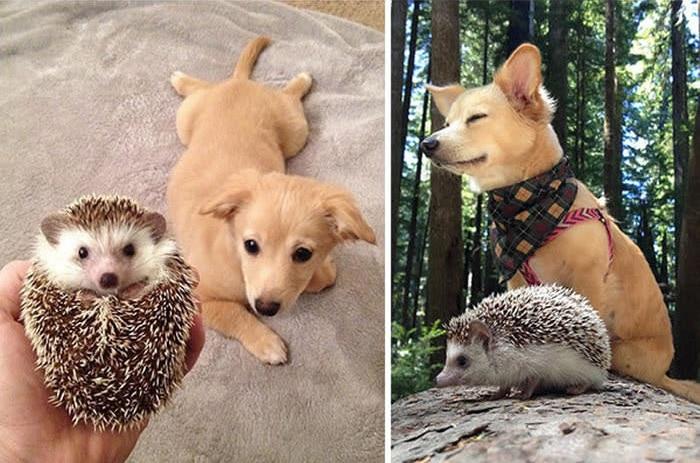 együtt felnövő állat