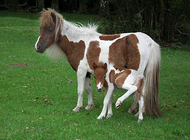 miniatűr állatok