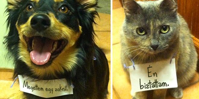 rosszcsont állatok