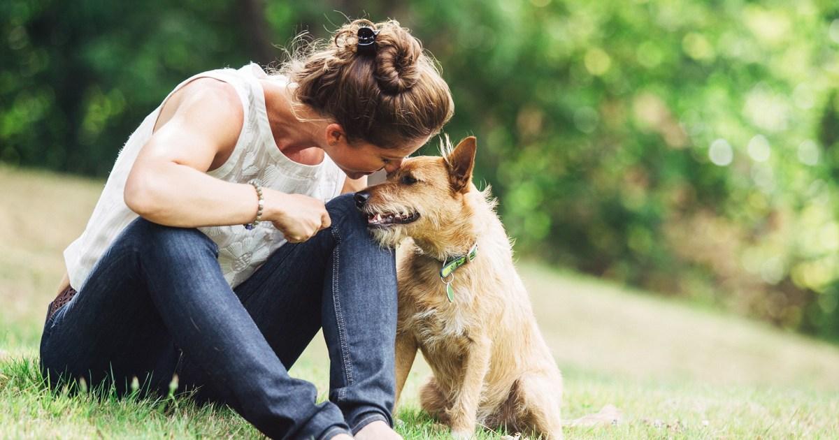 Az amerikaiak a gyereküknek tartják a kutyájukat