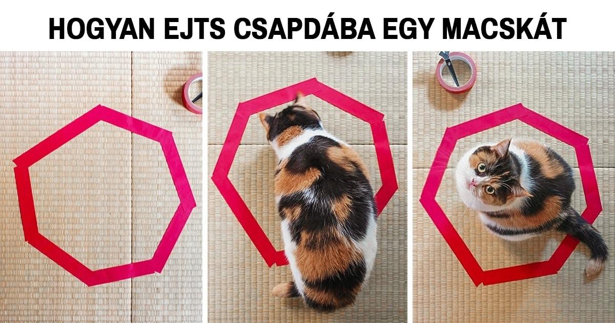 a macskalogika semmi máshoz sem fogható