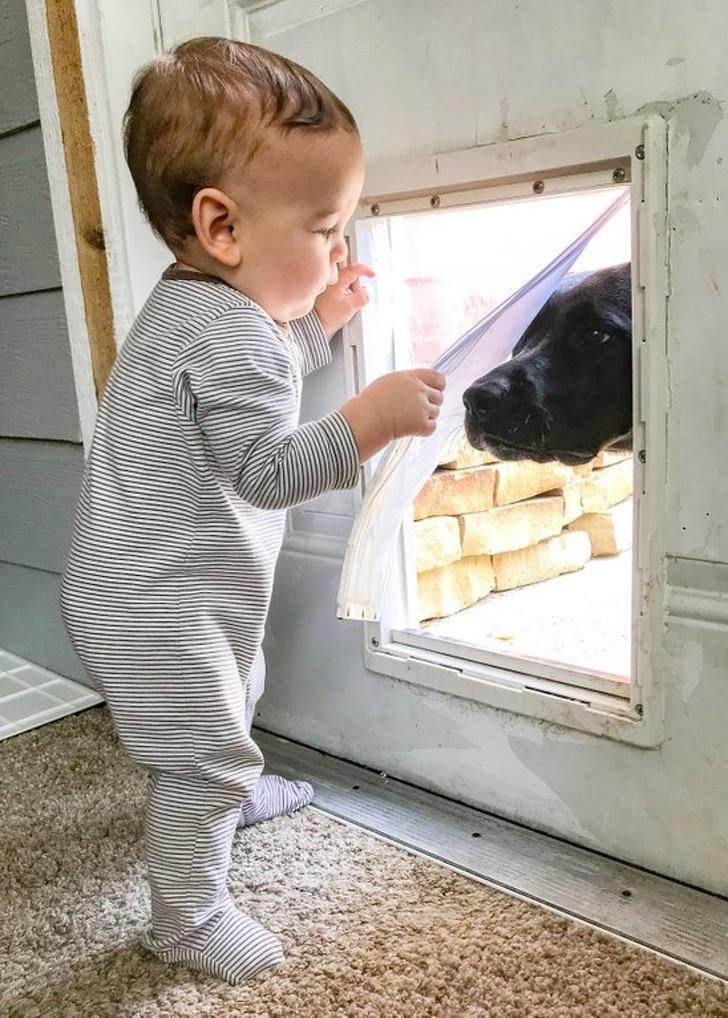 a gyerekek nem élhetnek házi kedvencek nélkül
