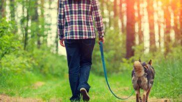 Az utolsó séta