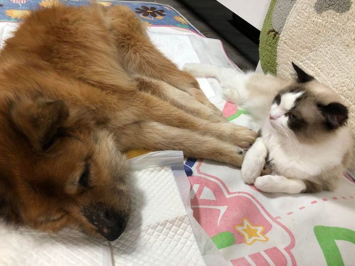 állati szeretet