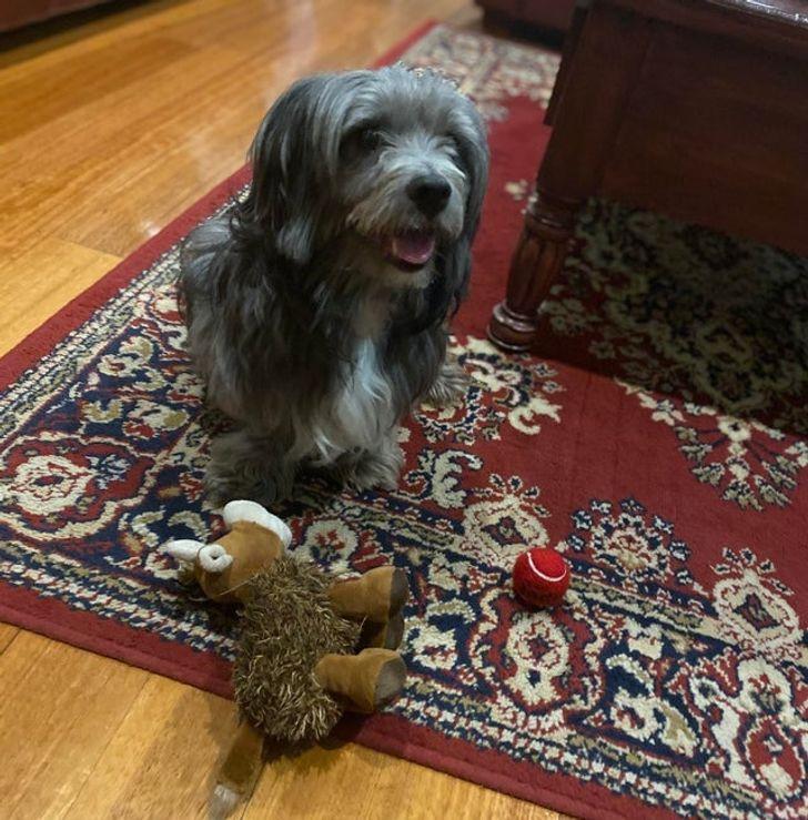 állatok új otthonra találtak16