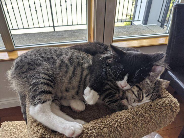 állatok új otthonra találtak6
