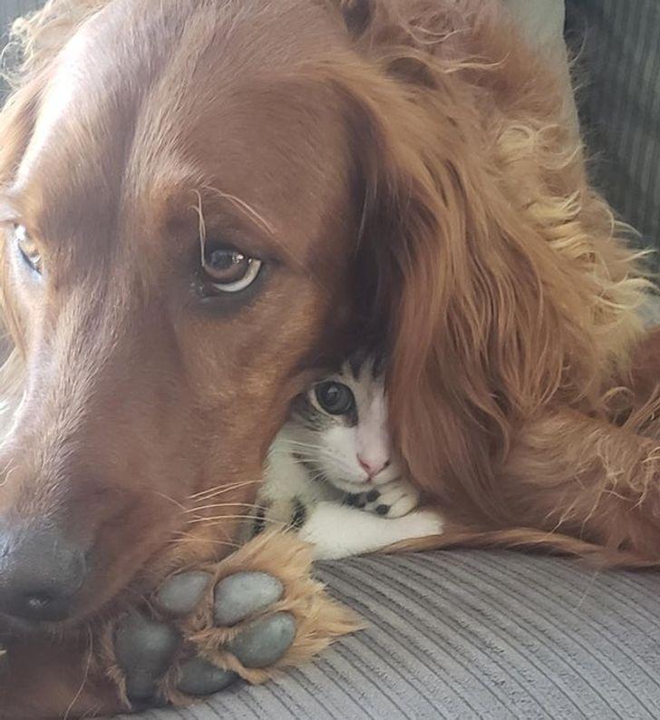 állatok között szoros barátság alakult ki1