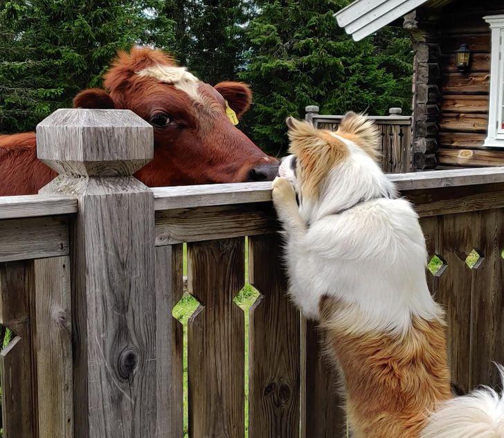 állatok között szoros barátság alakult ki10