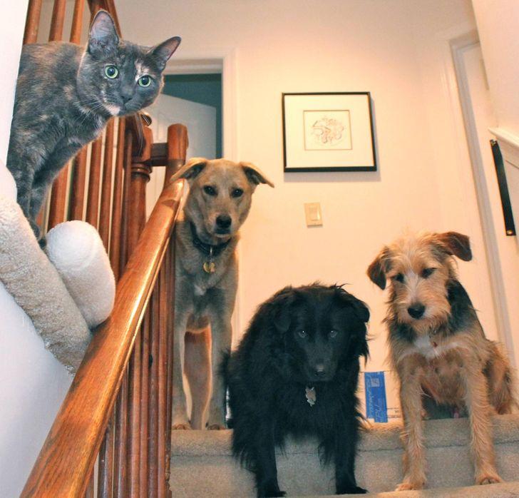 állatok között szoros barátság alakult ki11