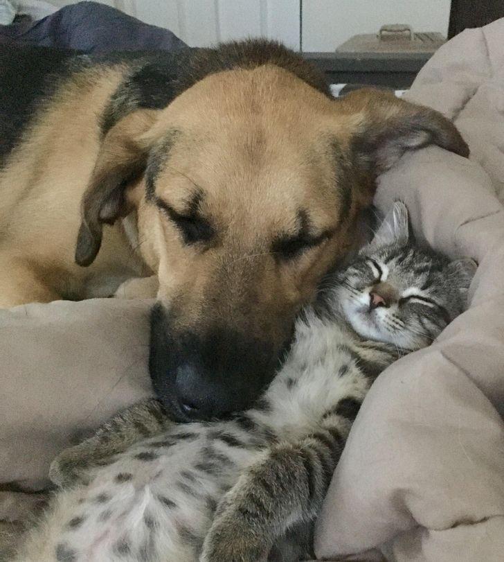 állatok között szoros barátság alakult ki13
